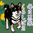 Daily Black Shiba Inu 2