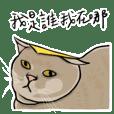 I am Bibo cat
