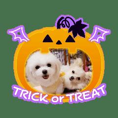 LUNA&SEAちゃん mixdog『ハロウィン~』