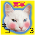 Made in Japan- White cat Sticker 3