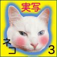 あじわいネコスタンプ3(実写)