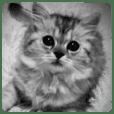 かわいい猫写真
