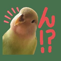 よもぎさんスタンプ(幼鳥)