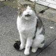 街猫ダンちゃんの独白4