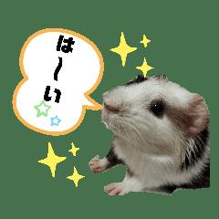 モルちゃん日常スタンプ2 MORU-CHAN