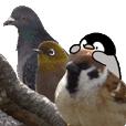 ペンちゃんと野鳥