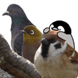 Pen-chan and wild birds