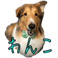 Ciel of Sticker of Shetland Sheepdog