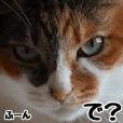 フォトすた!白&三毛ニャンズ