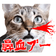 ダジャレ+死語のデカ文字猫スタンプ2