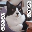 日本猫 銀ちゃんピーちゃん写真バージョン1