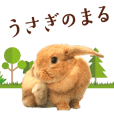 Rabbit of maru