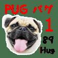 [Photo?] PUG dog part.1