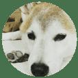 2019 狗狗的日常