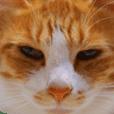 Cha-Cha the cat