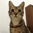 米米是隻貓。