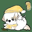 新シーズー犬『冬・年末』1