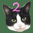 猫に夢中! 2