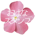 Flowers and message stickers -2-