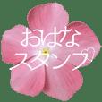 お花大好きメッセージ -2-