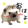 hedgehog mitarashi