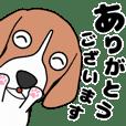 超元気なビーグル犬