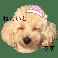 さいとうしおり@かわいい熊本弁