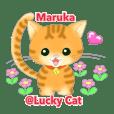 maruka@lucky cat
