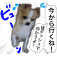 Dog,s Sticker