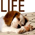 Da DOG Life