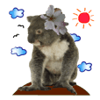 Koala's Daily talk (Chinese Version)