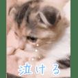 三毛猫ももちゃん2