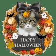 pesan dari kucing asli - Halloween!