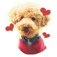 Toy poodle Aloha's stickers