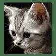 怒りっぽい猫、ボールちゃん