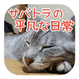 Silver tabby Rion's daily sticker