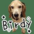 Birdy the Beagle