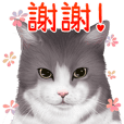 cats sticker vol.2 Chinese (Traditional)
