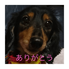 natsu_20201019140206