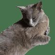 Mi-chan Cat