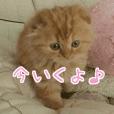 猫のとらぽんスタンプ