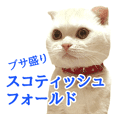 Sticker of Pathetic face Scottish Fold 2
