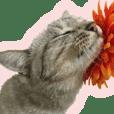 Baratanuki's cat's life