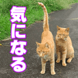 Stray cat photo Sticker