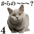 Cat Photo Stickers 04