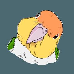 我是凱克鸚鵡(中文綜合版)