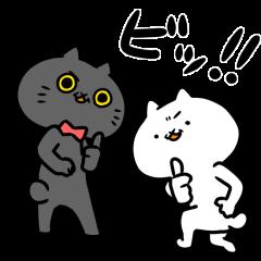 Intense Cat