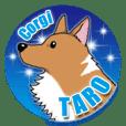 Taro Corgi