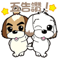 2 Shih Tzu Brothers-Part4