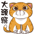 CAT BOOS